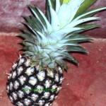 ದಿಡೀರ್ ಪರಂಗಿ ಕಾಯಿ(ಅನನಾಸ್)  ಉಪ್ಪಿನಕಾಯಿ