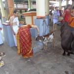 ಗೋ ಪೂಜಾ ಸಮಯ