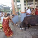ವಂದೇ ಗೋ ಮಾತರಂ